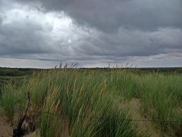 Grass on the Dune by 1nfiltrait0rN7