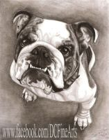 Bulldog #2 by FlyingFancy1