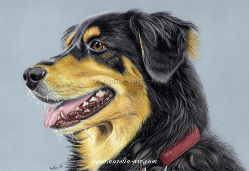 Dog Portrait 01 by aurelia-acc