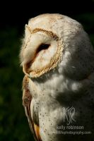 Barn Owl Profile by Shadow-and-Flame-86