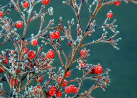 Frost in Sonoma Co. by smfoley
