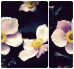 Petals Open To The Moon by ChEryLoVe