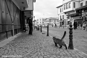 Street, Cat and Old Man by ganara