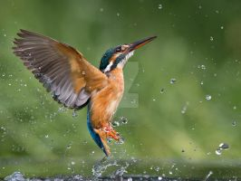 Messing about in the water by Jamie-MacArthur