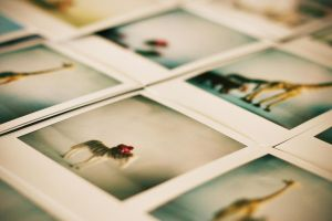 polaroids by S-Banh