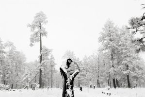 Pinetop1 by katyT