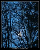 Cradle Of The Moon IV 892 by Eolhin