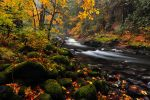 Salmon River, Autumn Study by greglief