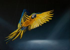 Macaw in flight by deRaat