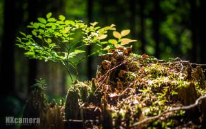 New Life by NXcamera