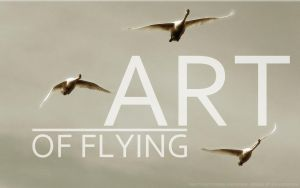 Art of Flying by jesandersen