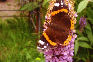 Flowers and Butterflies by TomRolfe