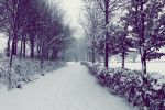 Winter's path to paradise by IndigoSummerr