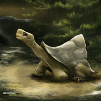 Tortoise by dankershaw