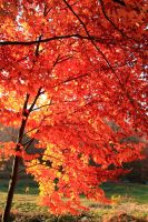 autumn leaves 1 by obicen