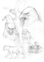 Gryphon practice by GaiasAngel