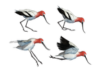 Wading Bird 01 PNG Stock by Jumpfer-Stock