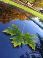 Reflecting Fall by Anachronist84