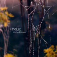 Spider's web by Anymouss