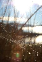Web in light 2 by rebekahlynn-photo