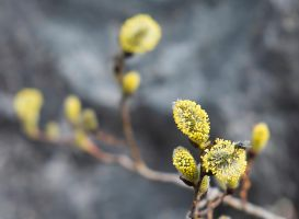 Springtime is coming by Sjodin