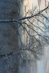 Cold Silence by Passion4Photos