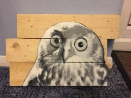 Supprised owl by 00lukey00