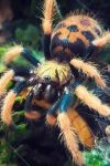 green bottle blue tarantula II by akuiblis