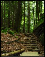 Stairs to the Forest by MariusStormcrow