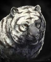 White tiger + VIDEO by waltwoor