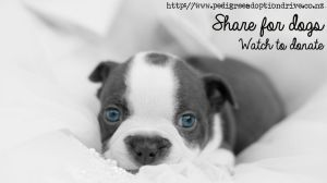 Share For Dogs ! Watch to donate ! by Thelema001