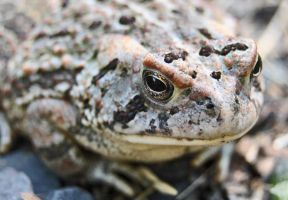 toad by takeanotherpic020