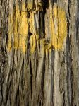 Real texture_bark-paint 01 by Aimelle-Stock