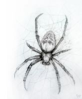 Spider by the-nika