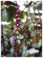 Microflowers by eosthilas