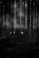 sheeps by AnjaMillen