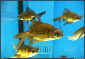 Fish Stock 0076 by phantompanther-stock