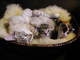 Basket O' Cute by OpheliaBell