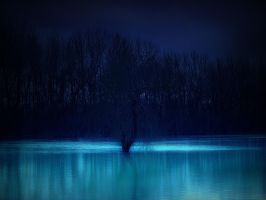 blue beauty in the night by danamis