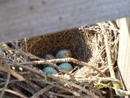 My babies, Eggs by annieheart12