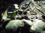 Creeping Ivy by GiveIntoDarkness