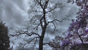 Dark Clouds Through The Trees by ShaunAnarchy