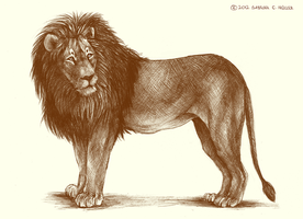 Ballpoint Lion by Feyrah