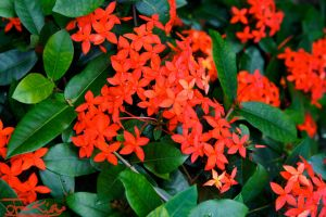 Tropical Red Flowers by JKase911