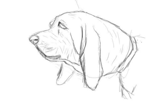 [practice] Basset Head by chworz