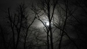 Fairy Moon by Music---Junky