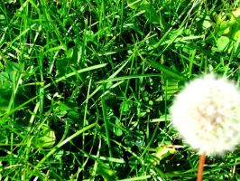 summer love in the grass by carlyx05x