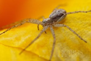 Seippel Spider by leavenotrase