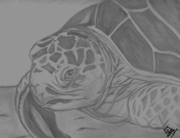Sea Turtle by ColdBlueEyes7