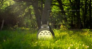 Totoro's Domain by Joshsherwood